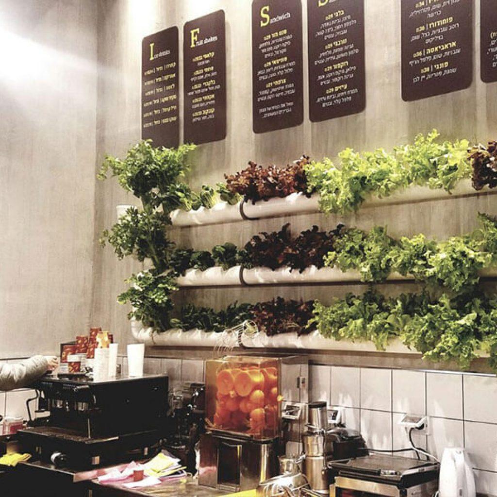 מערכת הידרופונית לגידול חסות תלויה על קיר מסעדת אורבן פוד