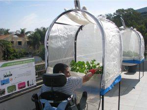 גבר בכסא גלגלים מטפל במערכת הידרופוניקה מסוג LivingBox