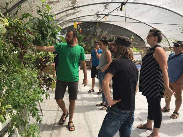 מבקרים בחממת ההדגמה של חברת LivinGreen בבית חירות