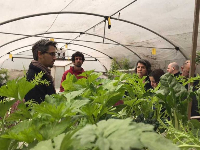 Aquaponics-&-Hydroponics-workshop--LivinGreen