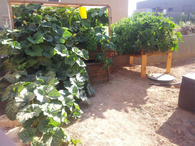 גידול ירקות במערכת אקוופוניקה בשיטת ריקון והצפה