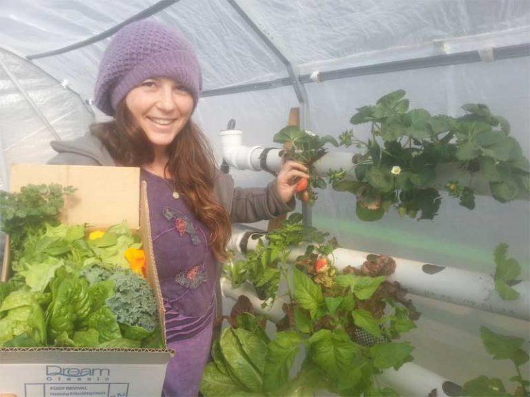 אשה צעירה קוטפת תוצרת הידרופונית