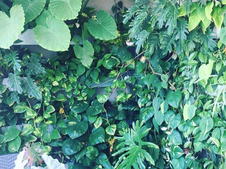 קיר ירוק טרופי במרפסת