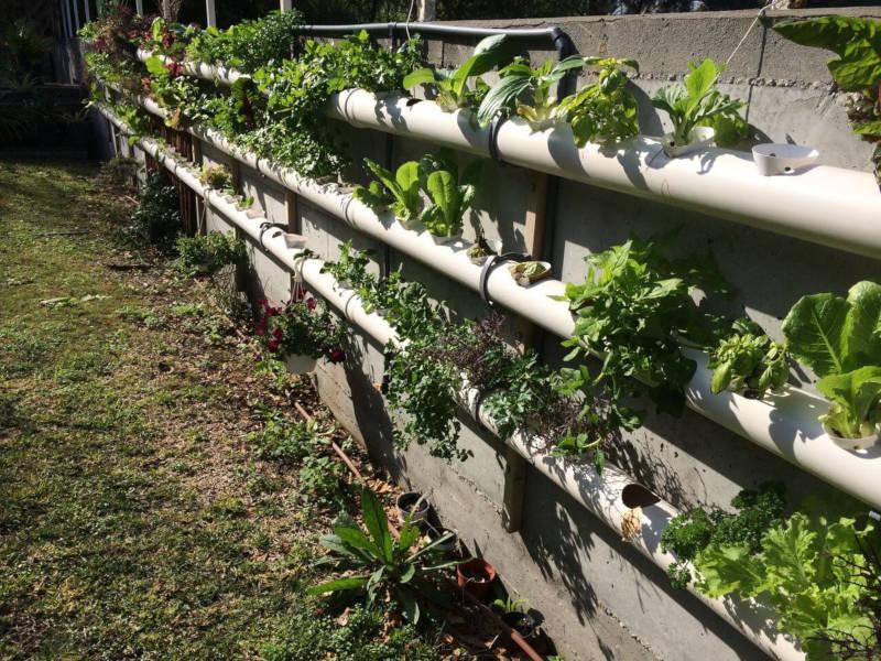 גידול צמחי מאכל בתעלות גידול הידרופוניות על גדר הגינה
