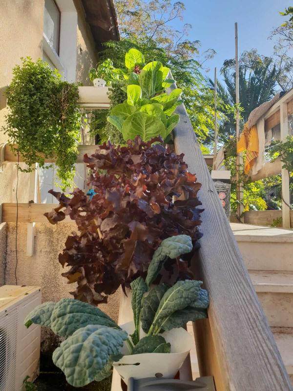 גידול הידרופוני בצמוד למעקה גרם מדרגות בכניסה לבית