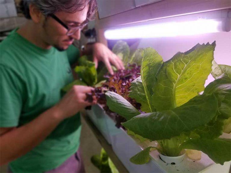 גידול צמחי מאכל בתאורת לד