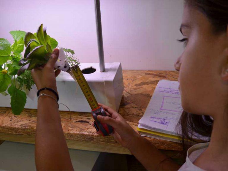 תלמידה מודדת את אורך השורשים של שתיל הידרופוני