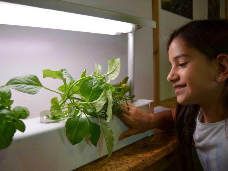 תלמידה מסתכלת על גידול הידרופוני בתאורה מלאכותית
