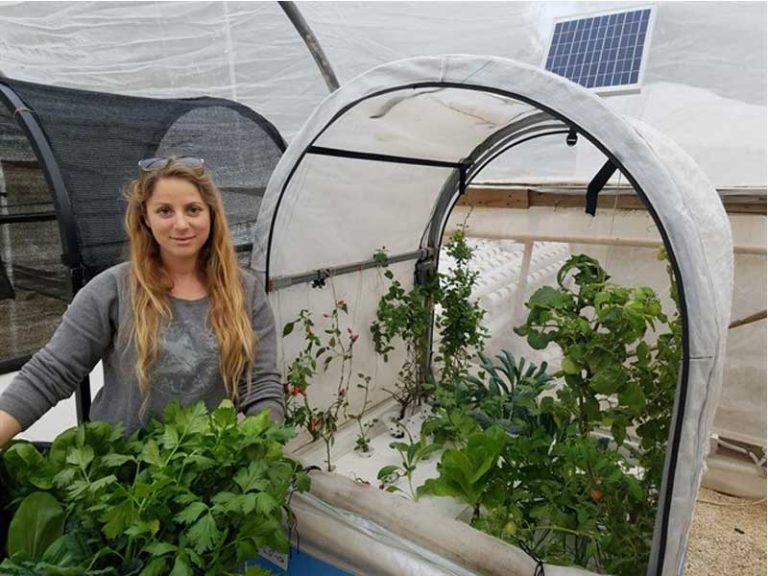 גידול ירקות בבית, קטיפת תוצרת הידרופונית