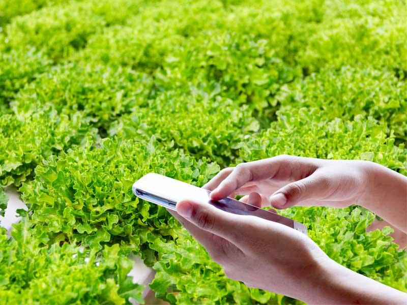 אפליקציות יעילות למגדל בהידרופוניקה
