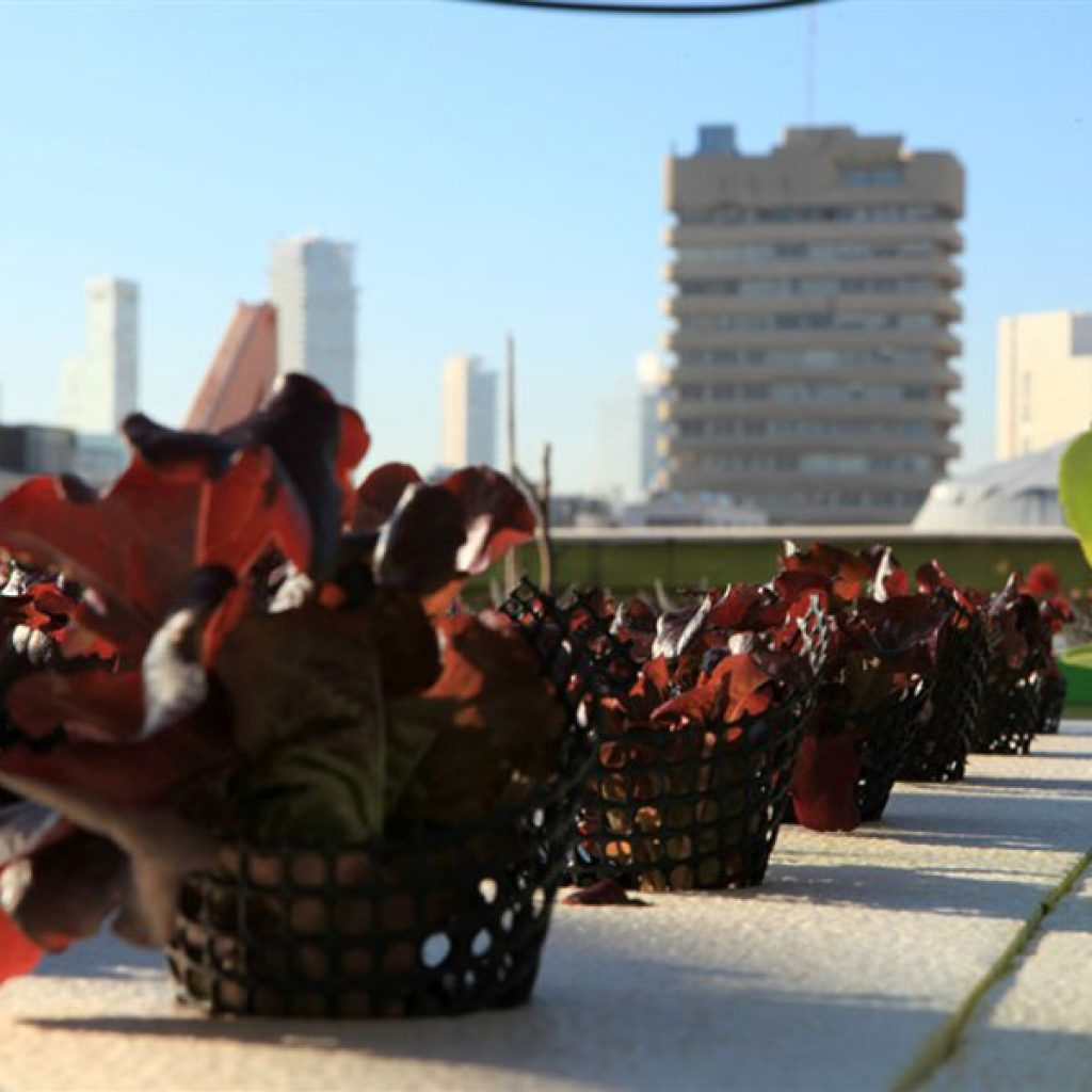 חקלאות עירונית הידרופונית על רקע העיר תל אביב