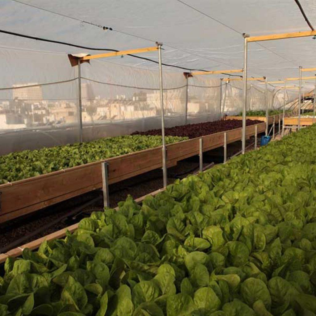 חקלאות עירונית על גג הדיזנגוף סנטר בתל אביב