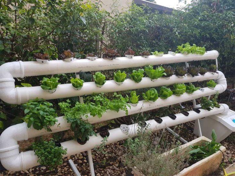 """גידול עלים ירוקים במערכת הידרופוניקה """"מרום"""""""