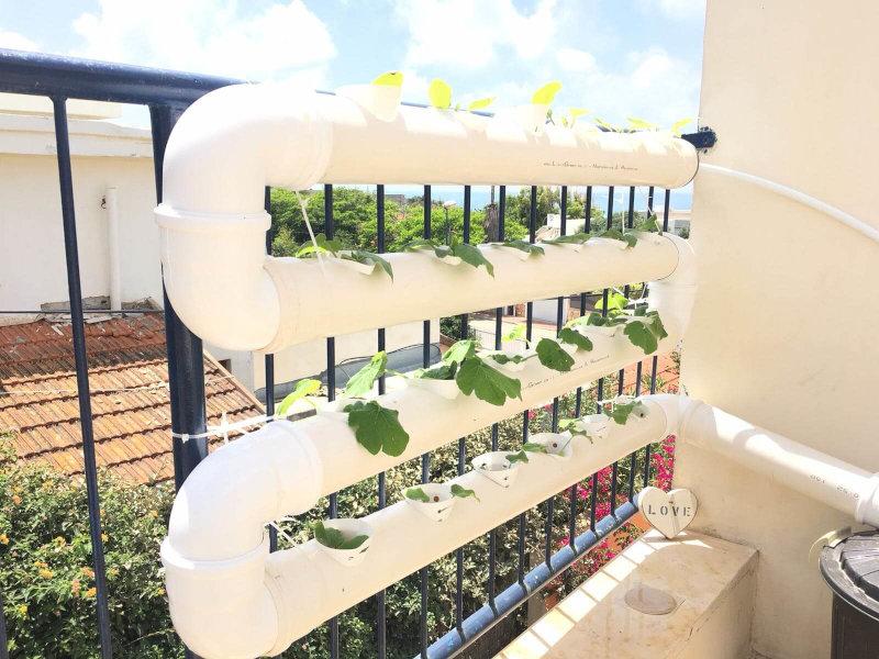 מערכת הידרופונית תלויה על מעקה המרפסת
