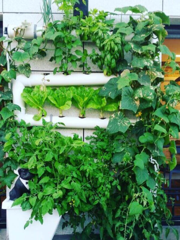 גינת ירק ורטיקלית שופעת מצמחי מאכל