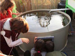 קבוצת ילדים ומורה מציצים בברכת הדגים במערכת אקוופוניקה