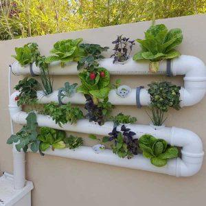 ערכה לבניית מערכת לגידול הידרופוני על הקיר- 24 צמחים