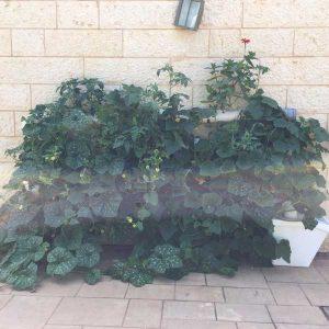 מערכת לגידול הידרופוני ורטיקלי- 'מרום' 24 צמחים