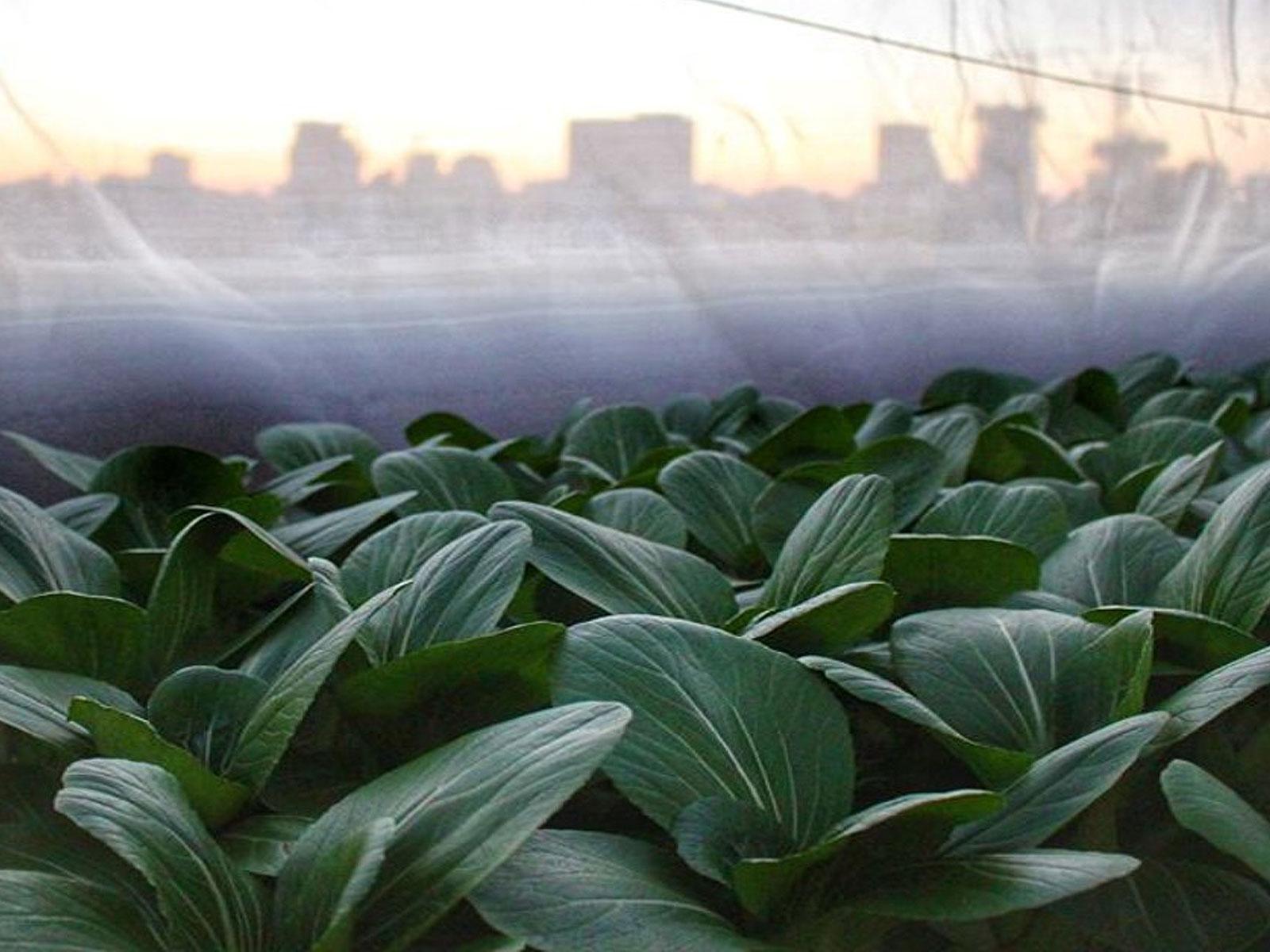 מהי חקלאות עירונית?