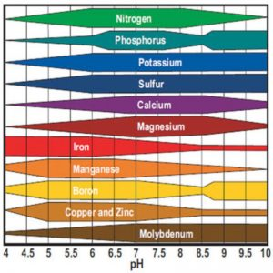 מגביר חומציות – pH Down