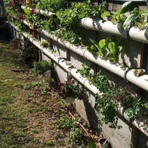 ערכה לבניית מערכת לגידול הידרופוני על הקיר- 76 צמחים