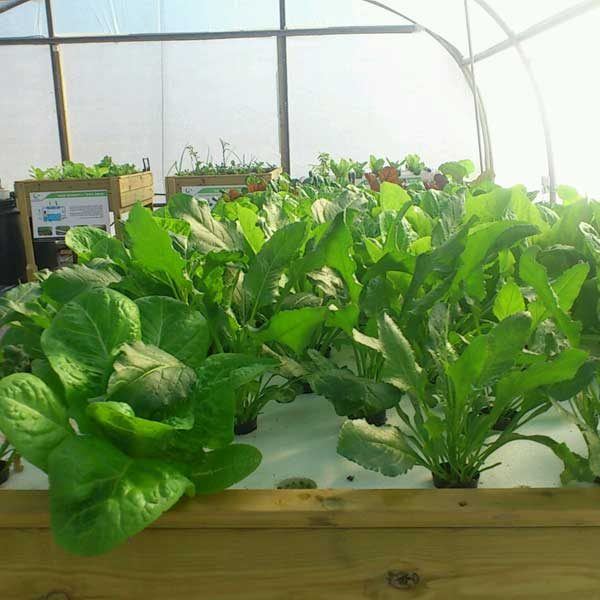 DWC hydroponics system
