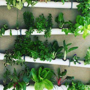 ערכה לבניית מערכת לגידול הידרופוני על הקיר- 44 צמחים