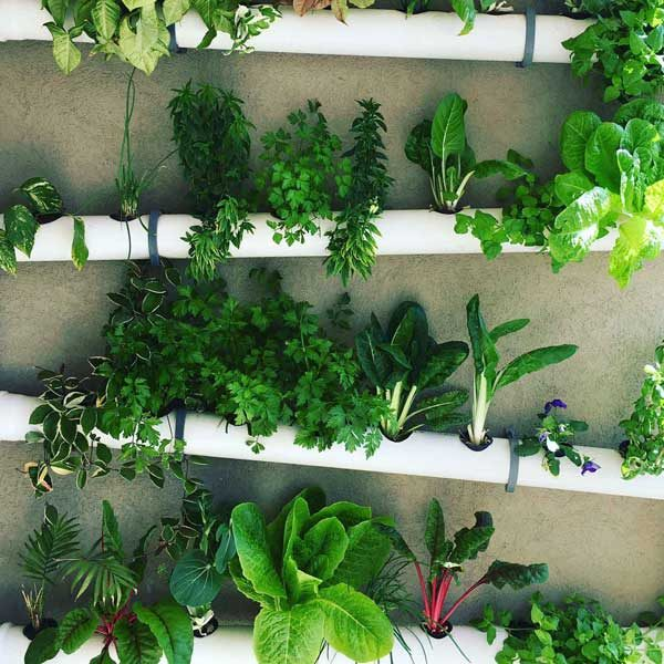 Leafy greens in hydroponic channels