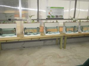 Aquaponics systems for school