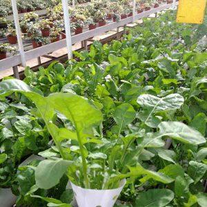 גידולים הידרופוניים בחממה חקלאית בבית הספר