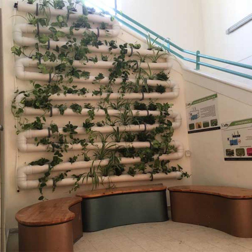 קיר ירוק הידרופוני בבית הספר