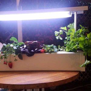 מערכת 'אור' לגידול הידרופוני בתוך הבית