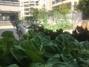 Urban agriculture complex in school