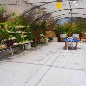 סדנת אקוופוניקה והידרופוניקה למגדלים ביתיים