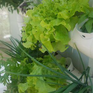 ערכת הידרופוניקה מושלמת לגידול ירקות בבית – גינת ירק 12 צמחים