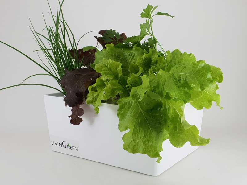 אדנית הידרופונית לגידול 5 צמחים