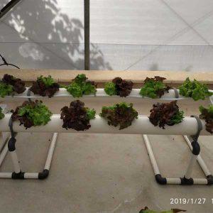 מערכת הידרופוניקה LivingFruit לגידול 12 צמחים