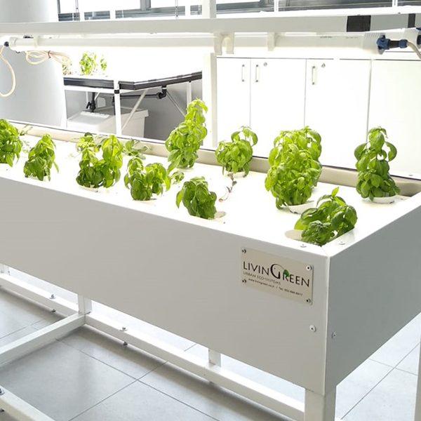 מנורת לד לגידול צמחים