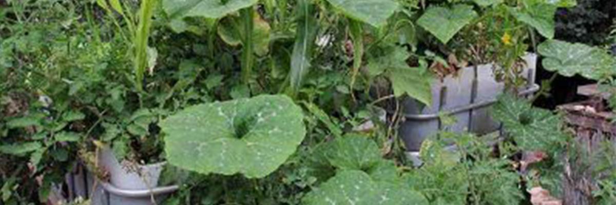מערכת ריקון והצלה לגידול צמחים