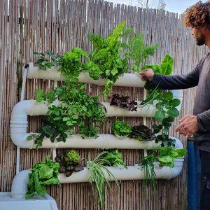 הערכה המושלמת לגידול ירקות בבית – הידרופוניקה – גינת ירק 24 צמחים