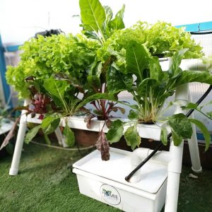 ערכת הידרופוניקה Homie מושלמת לגידול ירקות בבית – 8 צמחים