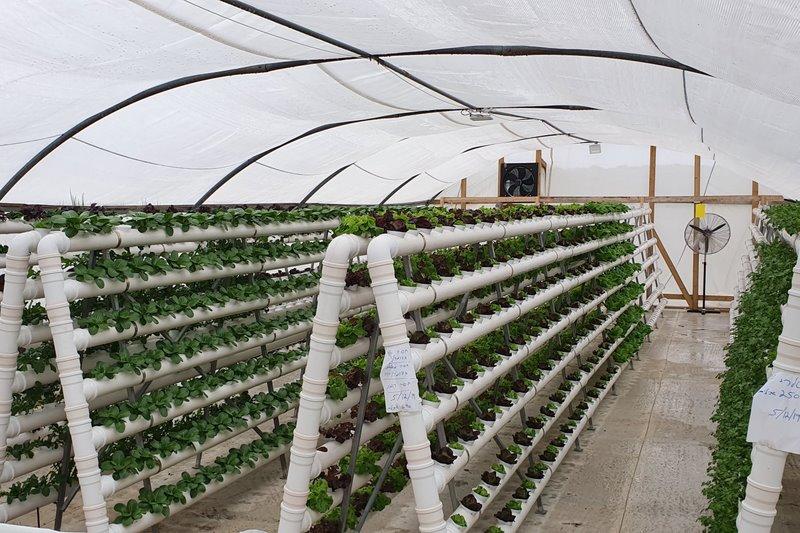 חוות אבני דרך, NFT תעלות ורטיקלי