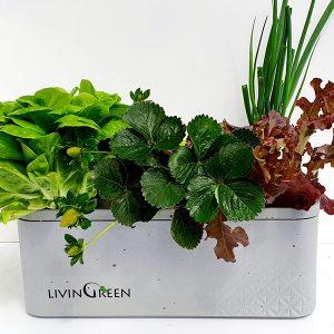 ערכת הידרופוניקה GreenBox G6 מושלמת לגידול ירקות בבית – 6 צמחים