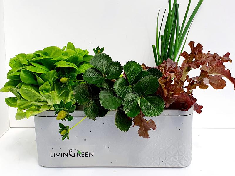 גרין בוקס לגידול 6 צמחים
