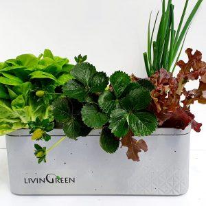 GreenBox G6 אדנית לגידול הידרופוני – 6 צמחים