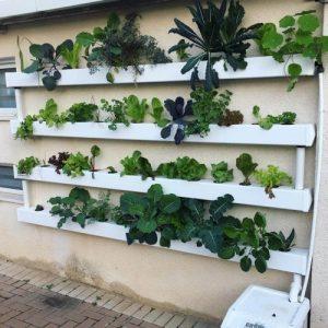 מערכת הידרופונית מעוצבת תעלות מרובעות 0.97 מטר – 16 צמחים