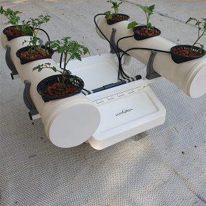 LivingSpace – 6 צמחים גדולים