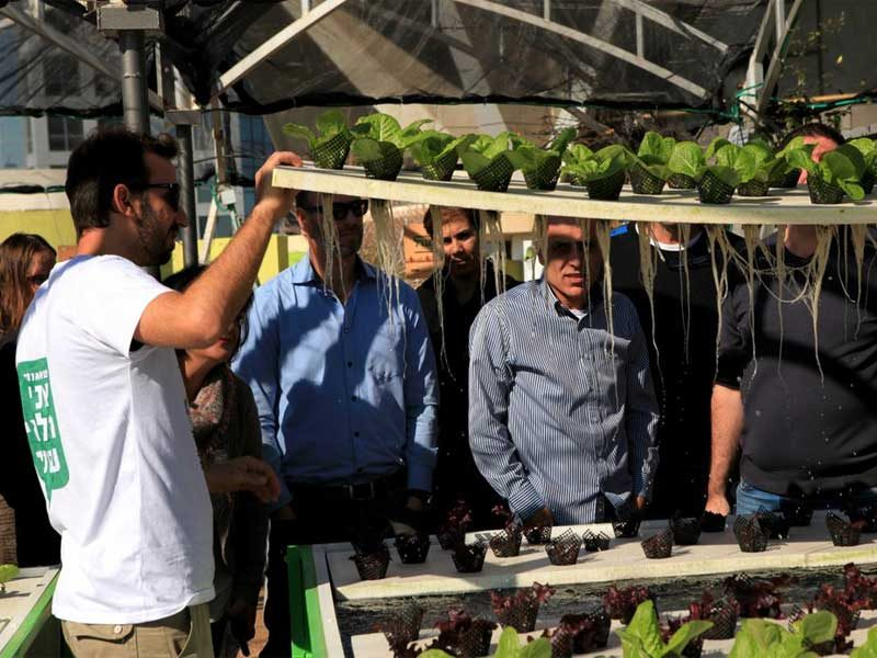 Commercial-hydroponics-course---LivinGreen