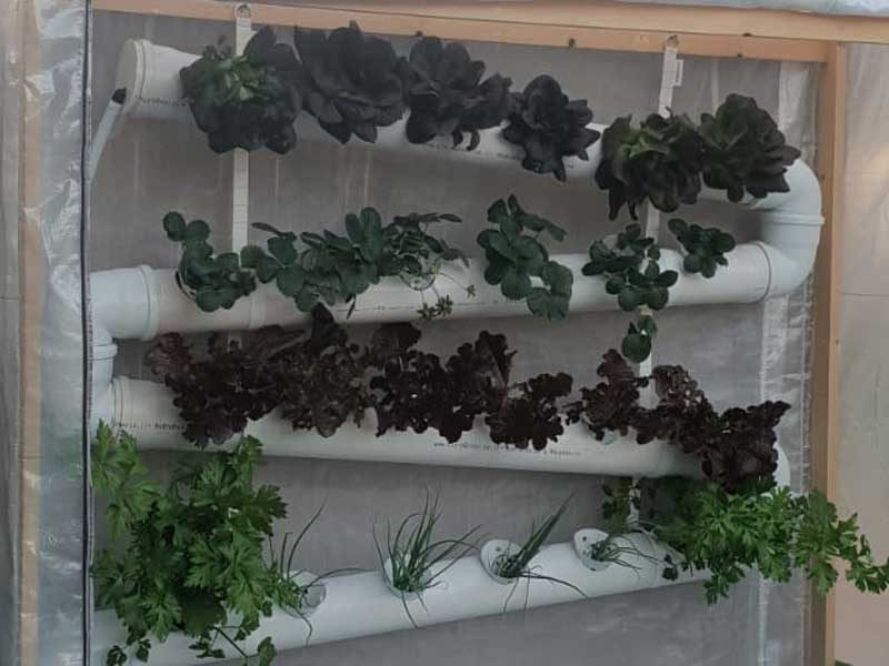 גינת ירק תלויה - גידול בשיטת הידרופוניקה