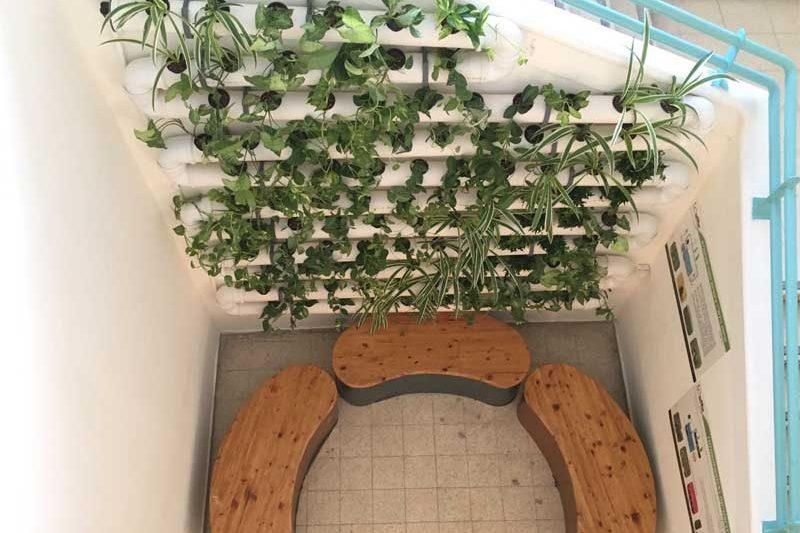 Hydroponic green wall in school